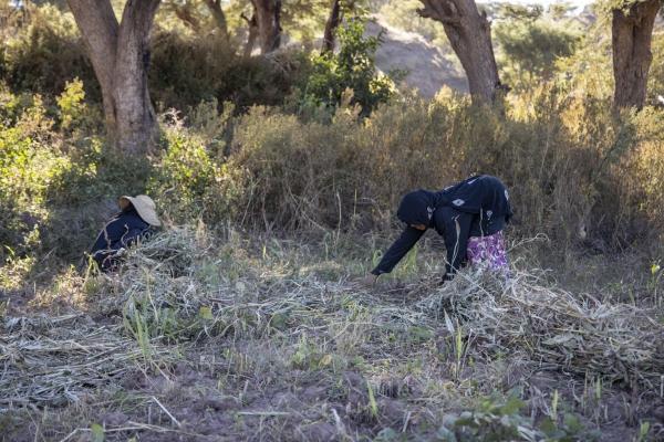في ظل حرب تحصد الرجال.. النساء في الريف صمام أمان لتأمين الغذاء
